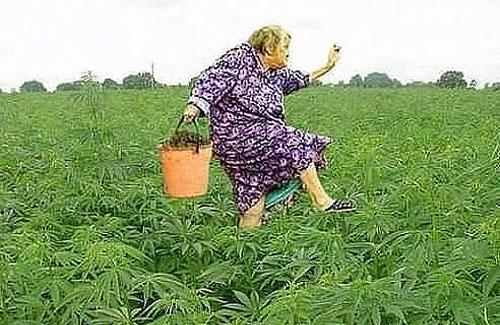 Чуйская долина фото конопля после курения марихуаны