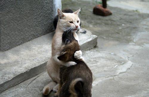 Кот жалеет кошку