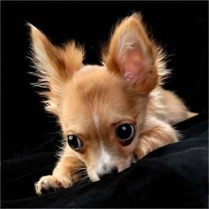 Собакотерапия для одиноких людей-1