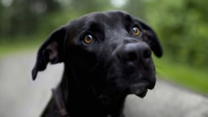Собакотерапия для одиноких людей-3