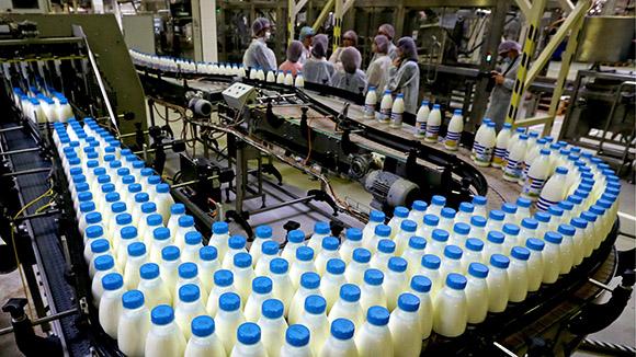 конвейер с молоком