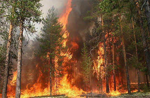 1276617842_fire_forest