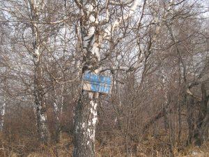 IMG 2950 300x225 Ради черного угля не жалко даже и села