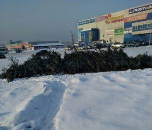 22 1 300x256 Конец празднику: новокузнечан возмутили брошенные где попало ёлки