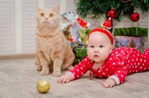 Буланова Ксения Новый год хомяков 300x199 «Котик – грелка для души»