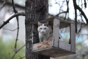 Куприкова Надежда Чем я не воробушек 300x200 «Котик – грелка для души»